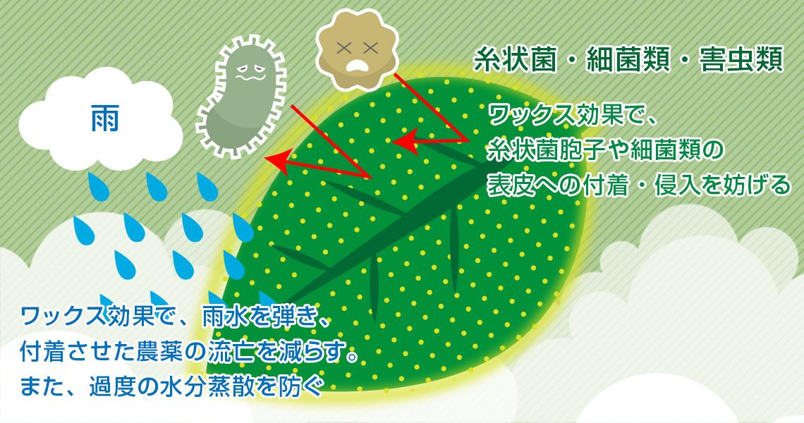パラフィン保護のイメージ